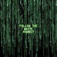 The matrix follow the white rabbit